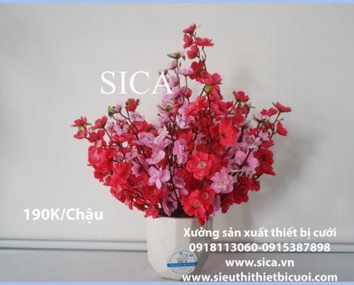 Mua chậu hoa đẹp giá rẻ