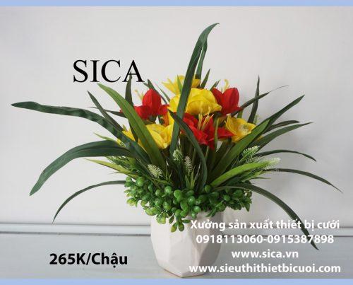 Mua mẫu chậu hoa mới nhất hiện nay