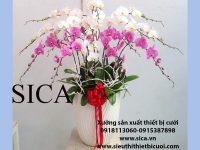 Sĩ lẻ các mẫu chậu hoa giá rẻ đẹp