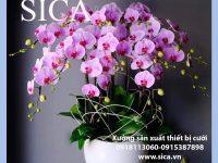 Thiết kế các chậu hoa đẹp giá rẻ