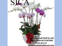 Nơi cung cấp các mẫu chậu hoa đẹp