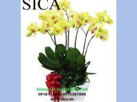 Nơi cung cấp các mẫu châu hoa đẹp rẻ