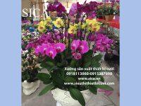Bán các mẫu chậu hoa có sẵn tại xưởng giá rẻ