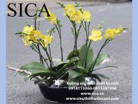 Những mẫu chậu hoa đẹp