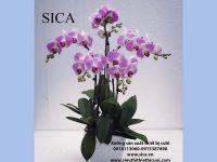Các mẫu chậu hoa đẹp