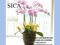Bán các loại chậu hoa có trên thị trường