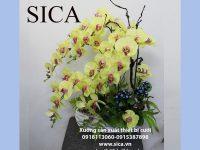 Chuyên cung cấp các mẫu chậu hoa lan đẹp