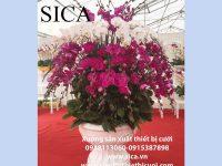 Chậu hoa giá rẻ có tại xưởng đồ cưới