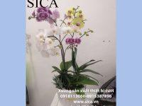 Chuyên thiết kế mẫu chậu hoa đẹp rẻ