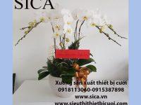 Chậu sứ kế hoa lan trắng giá rẻ