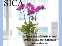 Nơi bán các mẫu chậu hoa đẹp rẻ