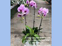 Cập nhật mẫu hoa lan mới nhất